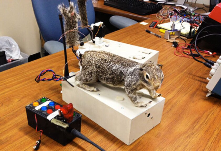 Robosquirrel takes on rattlesnake and wins
