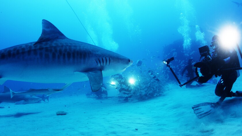 """Late filmmaker Rob Stewart in his last film, the documentary """"Sharkwater Extinction."""""""