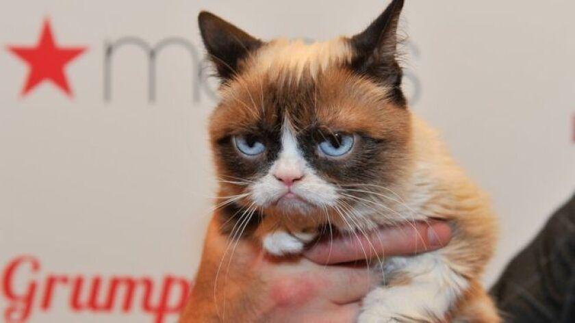 Un tribunal federal de California, Estados Unidos, ordenó esta semana que la popular gata Grumpy Cat (gata gruñona, en inglés) reciba US$710.000 tras ganar una demanda por una infracción de sus derechos de imagen.