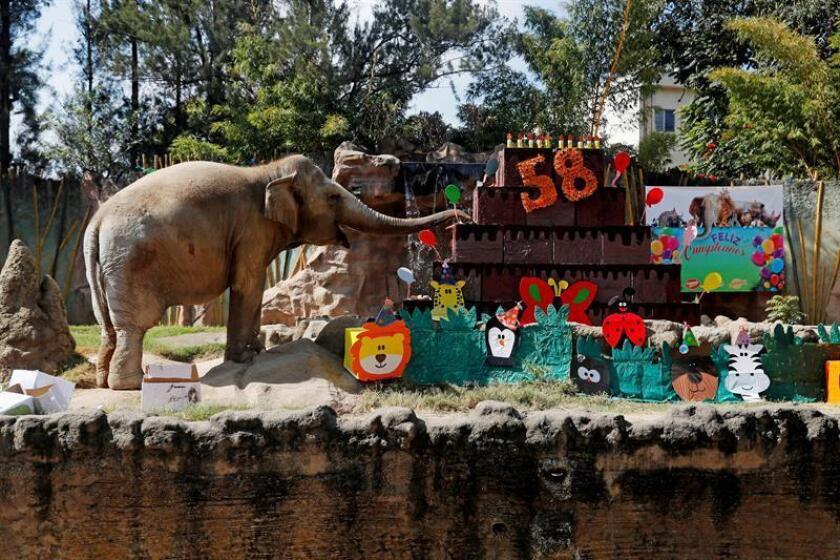 Trompita the elephant celebrates her 58th birthday on Feb. 17, 2019, at La Aurora Zoo in Guatemala City, Guatemala, with a giant cake and other goodies. EPA-EFE FILE/Esteban Biba