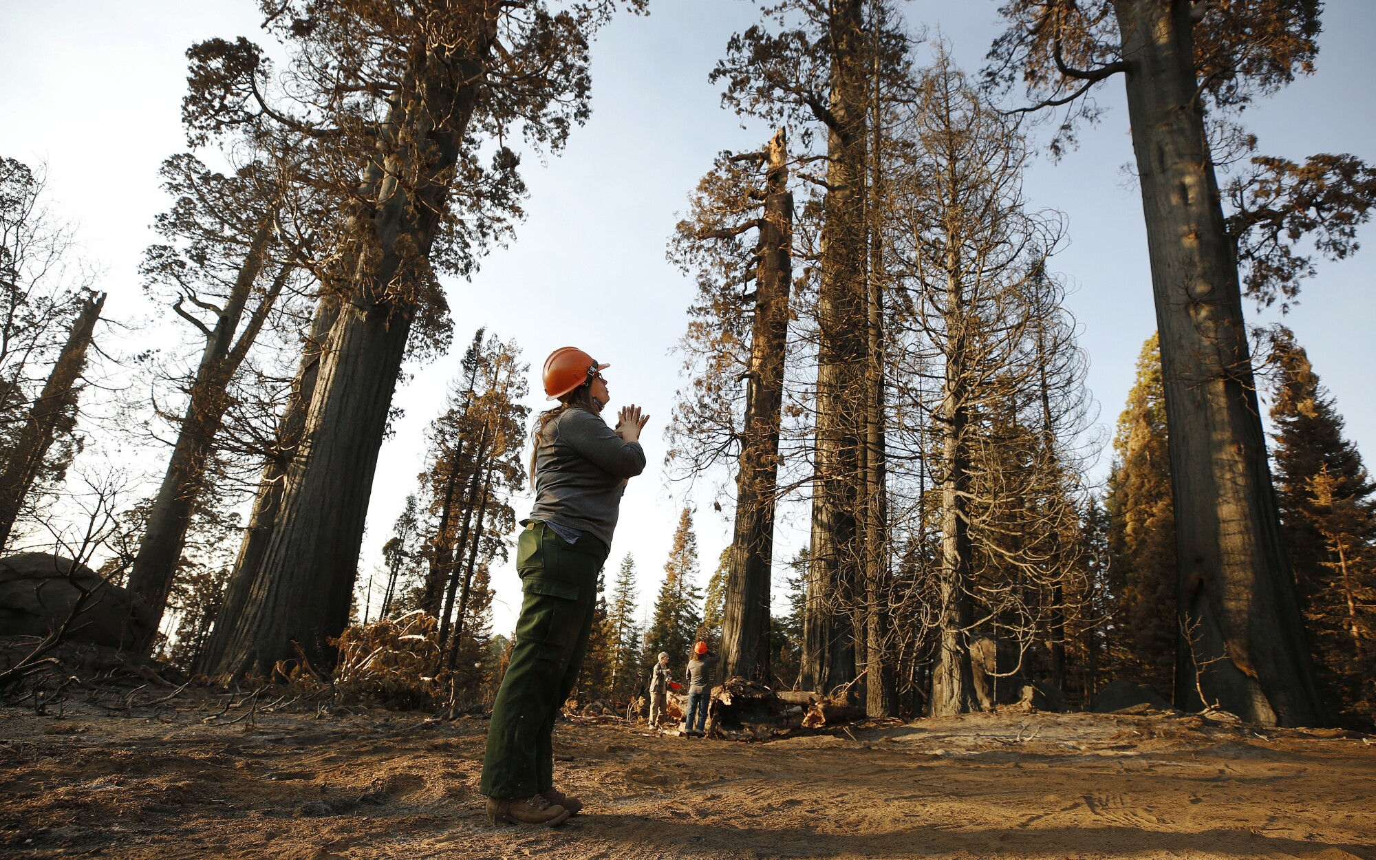 Kristen Shive, director of science for Save the Redwoods League, in the privately owned Alder Creek grove of sequoias.