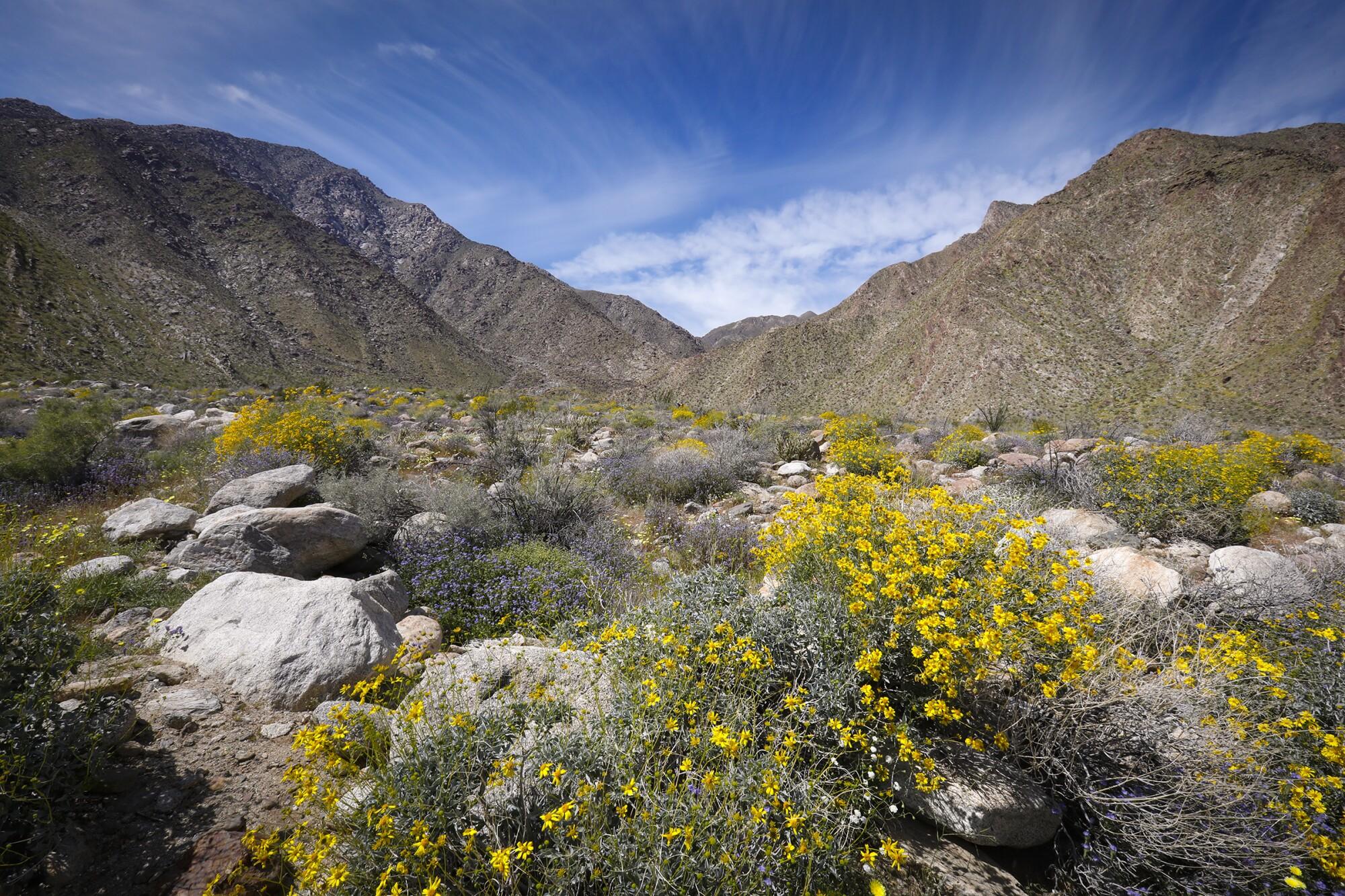 The Anza-Borrego desert.