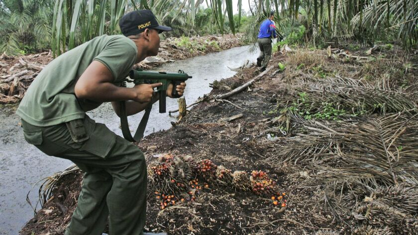 In this 2009 file photo, forest rangers sweep an area after a Sumatran tiger was spotted during thei