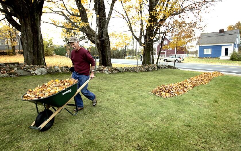 A man moves a wheelbarrow full of leaves