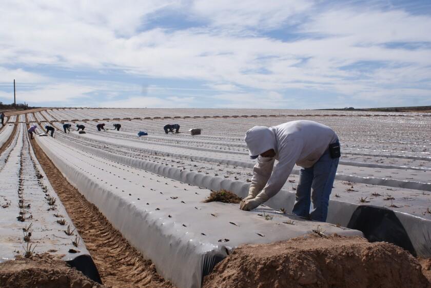 En el 2016, la industria agrícola ha creado 359,900 puestos de trabajo, pero todavía existe déficit.