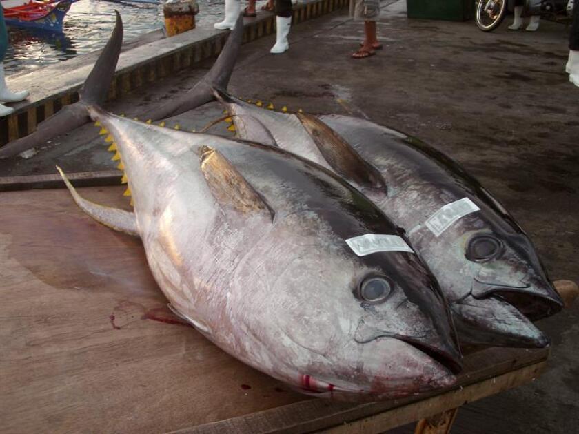Vista de dos atunes de aleta amarilla. EFE/Archivo