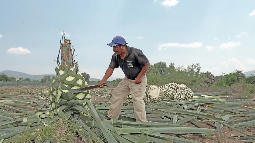 A mezcal family, a brand and a tradition