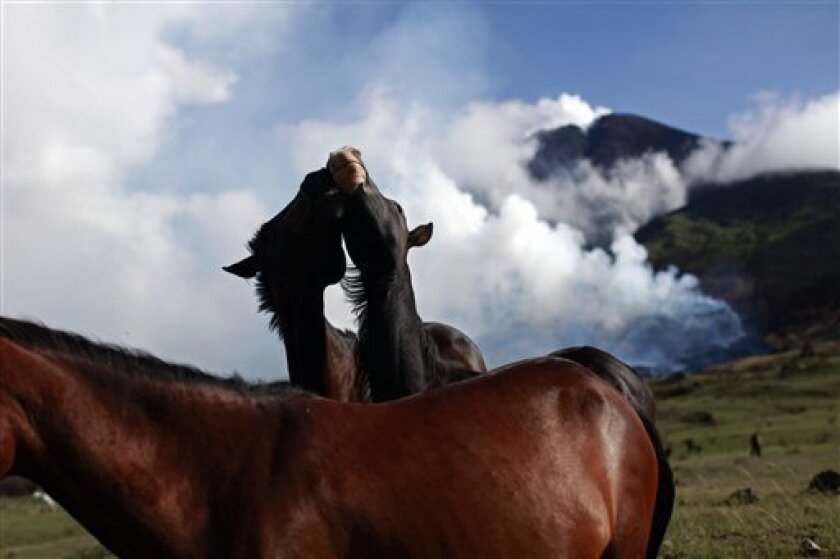 Two horses play next to the erupting Pacaya volcano in Villa Canales, 50 kms south of Guatemala City, Saturday, June 5, 2010. The volcano started erupting lava and rocks last May 27, forcing thousands of people to flee their homes and disrupting air traffic as ash drifted over major cities. (AP Pho