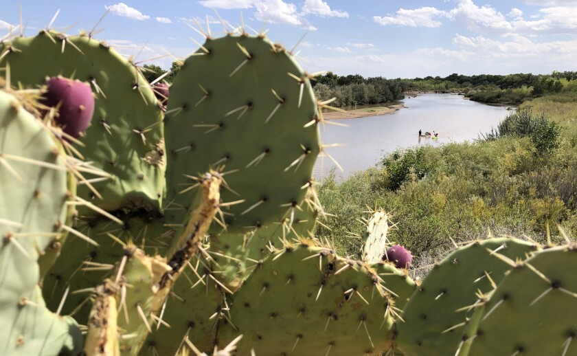 Cactus flanks the banks of the Rio Grande