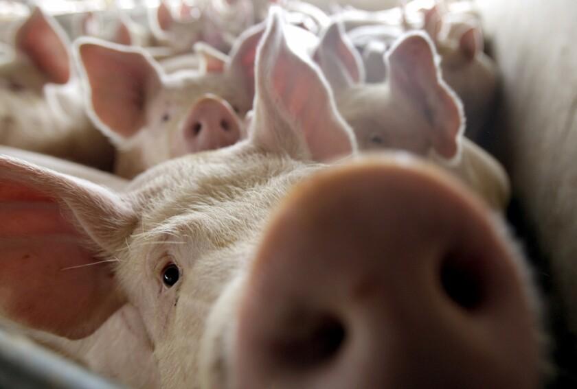 Antibiotics, animals and us