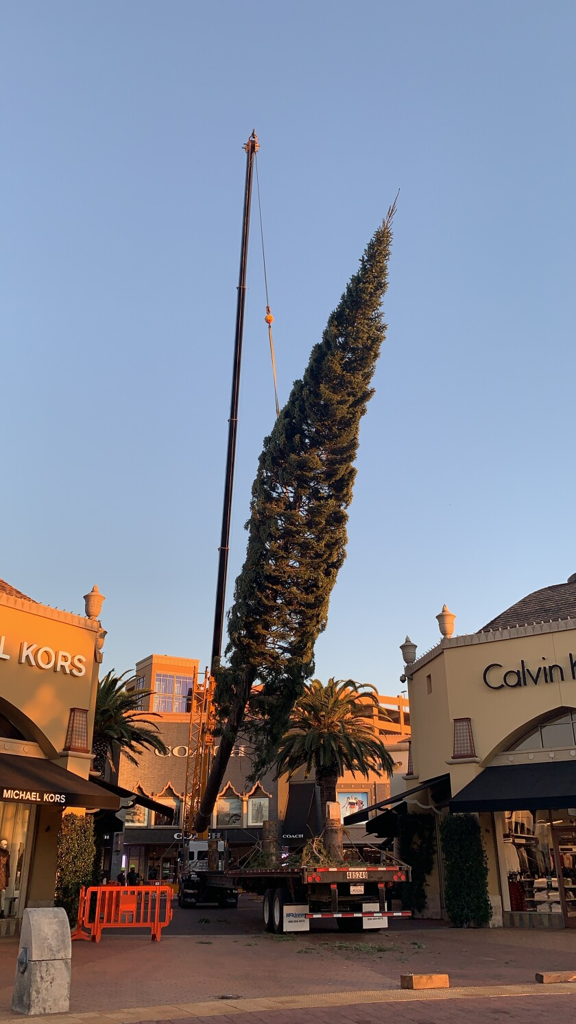 2019 Christmas tree at Citadel Outlets