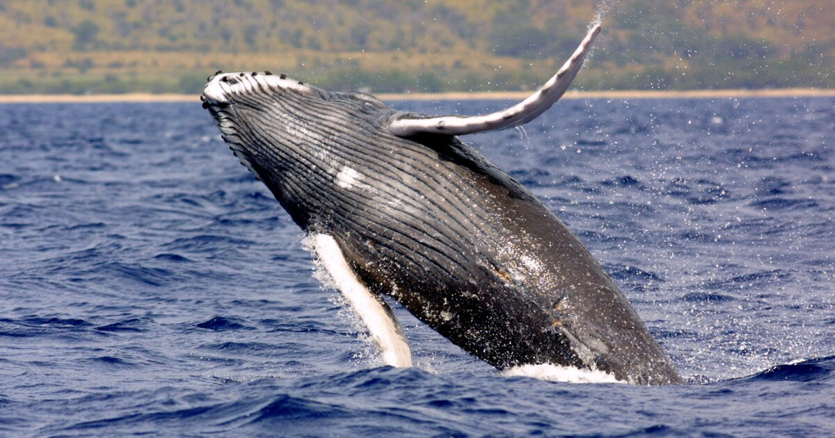 Best whale-watching spots in Southern California