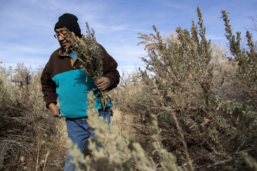 Jonah Yellowman, a 66-year-old Navajo spiritual leader, gathers sage on Cedar Mesa not far from the base of the Bears Ears buttes in southeastern Utah. He uses the plant in weekly ceremonies.