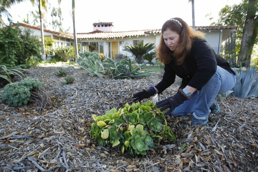 Turf grant recipient Holly Manion inspects drought-resistant succulents at her home in Rancho Santa Fe. The plants, mulch and decomposed granite were put in after Manion ripped out her lawn. / photo by Hayne Palmour IV * U-T San Diego