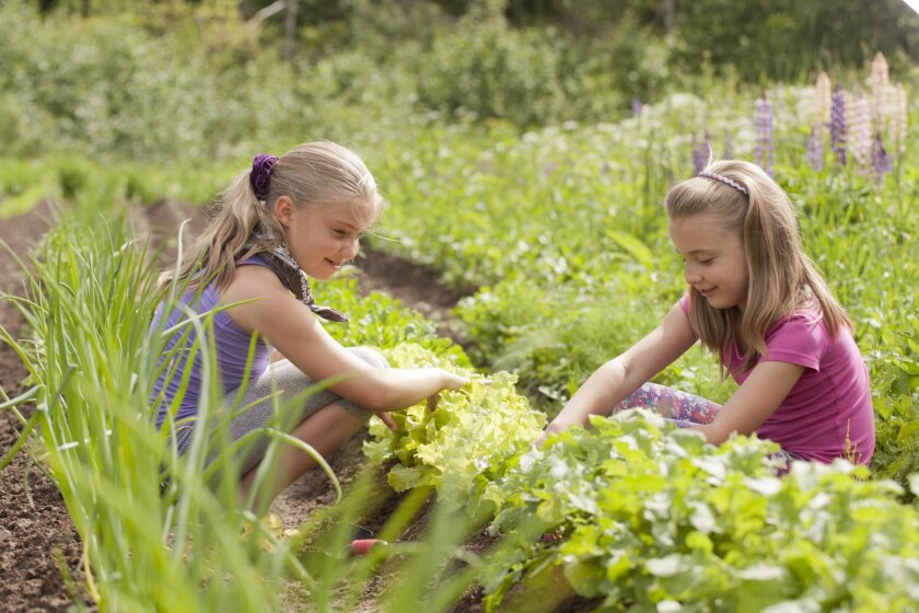 Teaching children to garden is a way of teaching them how to feed themselves.