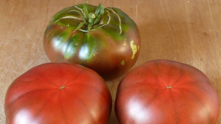 Black Krim tomatoes hail from the Isle of Krim in the Black Sea.
