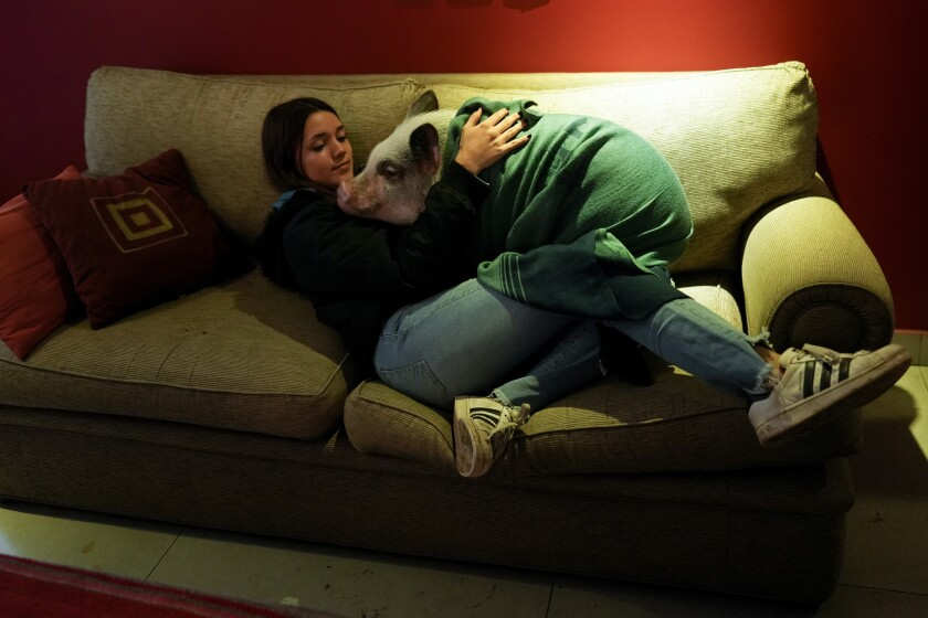 Luciana Benetti, 16, embraces her pet pig Chanchi at home in Buenos Aires, Argentina, Saturday, Sept. 4, 2021. Benetti found her plans for a big traditional 15th birthday party scrapped due to the COVID-19 pandemic last year. In its place, her parents gave her a pig, which turned out to be a loyal and loving companion. (AP Photo/Natacha Pisarenko)