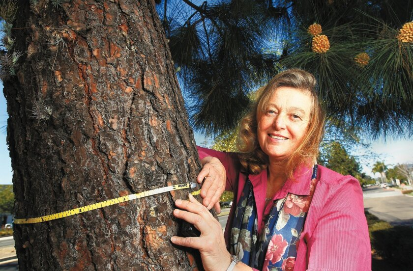Robin Rivet, an urban forester-arborist at the Center for Sustainable Energy California, measures tree diameter. Her special measuring tape can calculate the diameter while measuring the circumference.