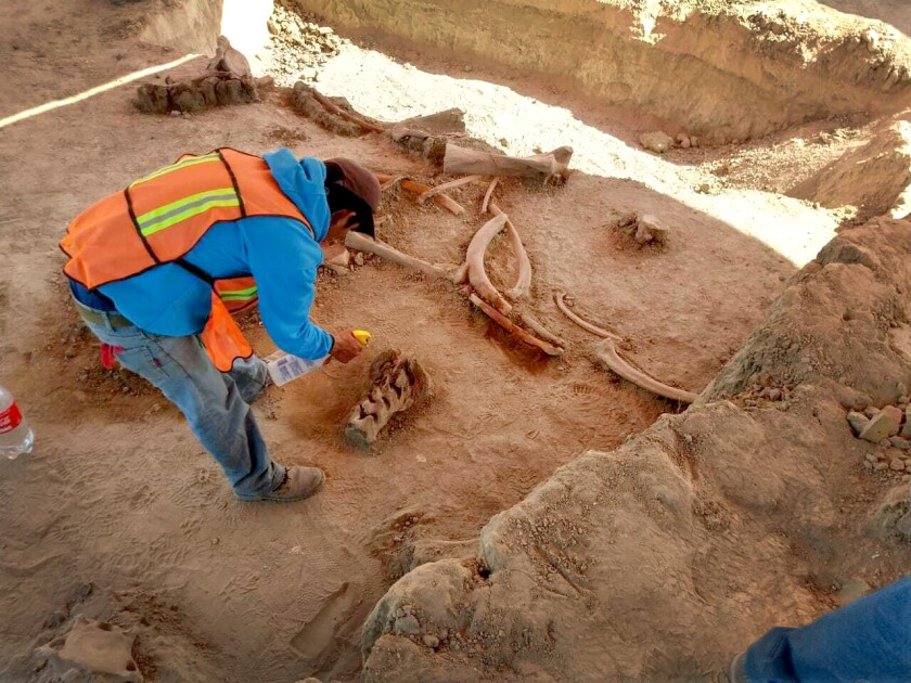 An archaeologist works at a site where mammoth bones were found near Mexico City.