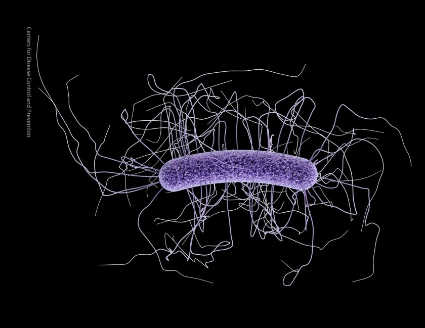 The bacterium C. difficile was responsible for almost half a million infections and was associated with about 29,000 deaths in 2011, researchers say.
