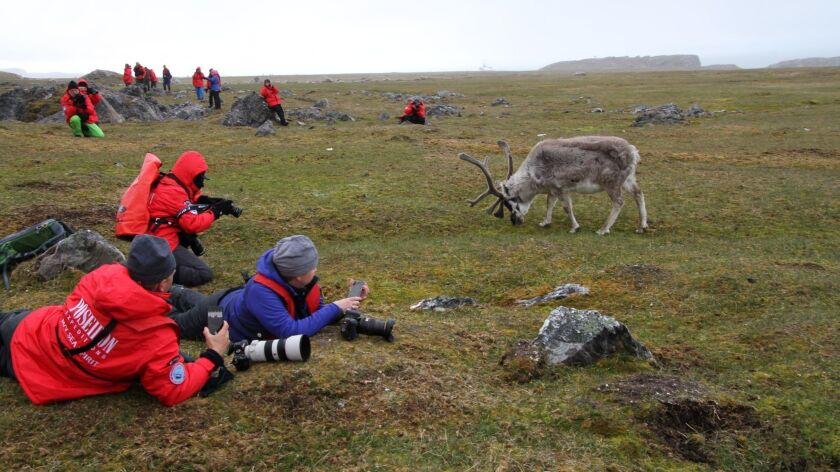 Photo tour participants are approached by a grazing reindeer on an island in Svalbard, Norway, duri