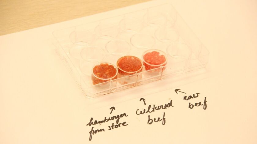 Cultured beef alongside regular meat in a lab.