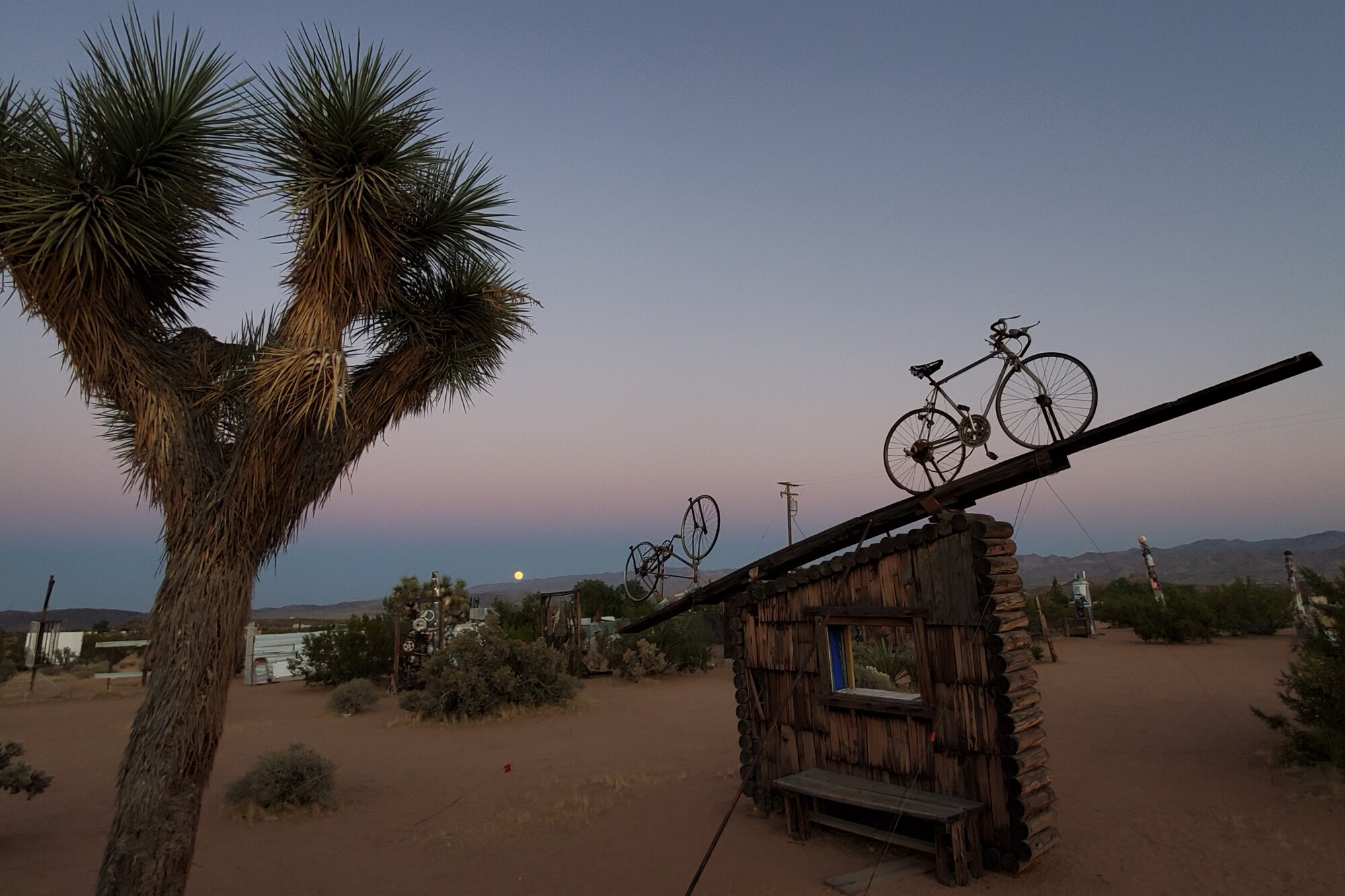 An outdoor sculpture made of two bicycles atop a wood structure, seen at sunset amid desert plants including a Joshua tree.