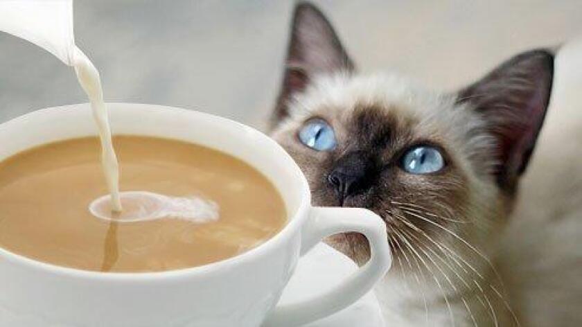 sddsd-coffee_cat_9-20160820