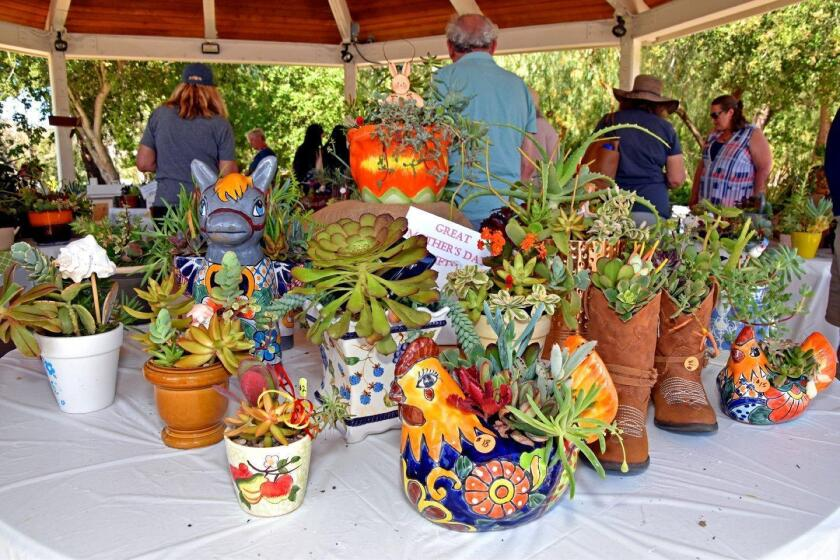 Poway Valley Garden Club's 40th annual Standard Flower Show - 4/14/2018