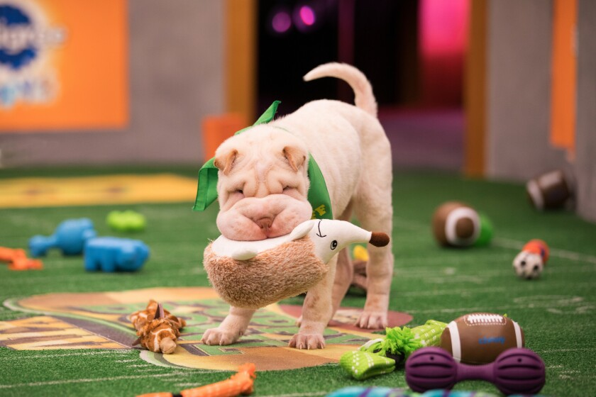 "Mr. Wigglesworth takes to the field for ""Puppy Bowl XIV."""