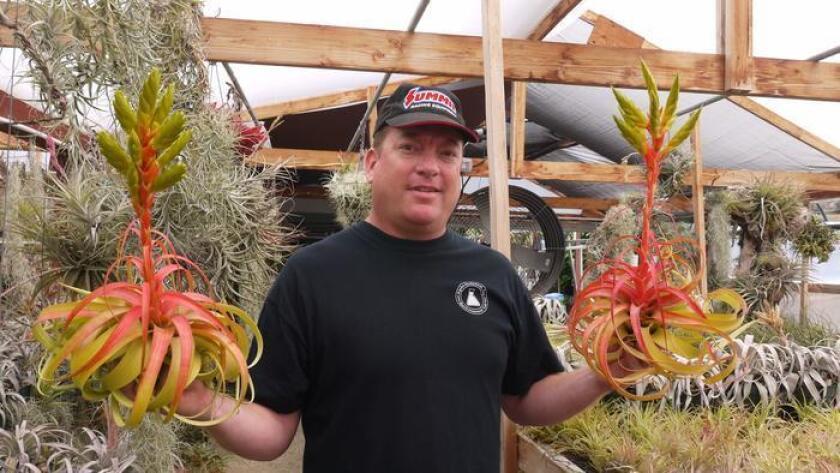 Chris Davis, owner of Davis Farms, stands in his Encinitas greenhouse. (Anthony Tarantino/DSD)