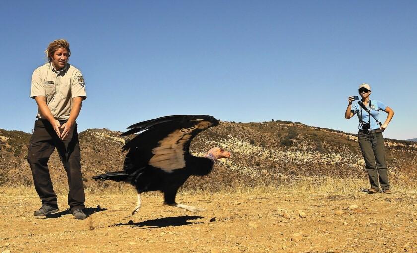 Condor released