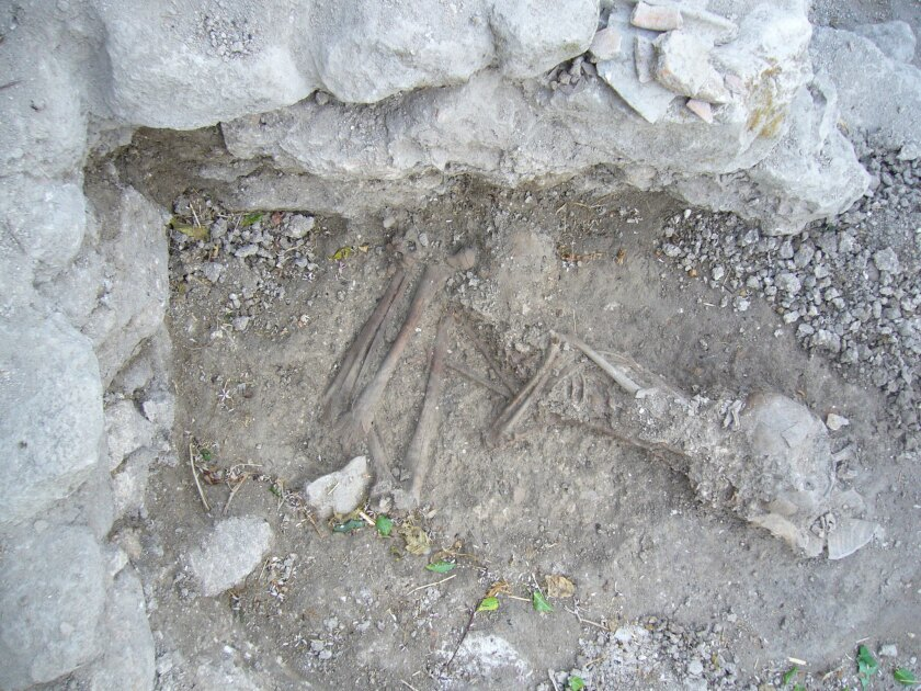 The buried remains of a Canaanite adult whose DNA was sequenced in the study.