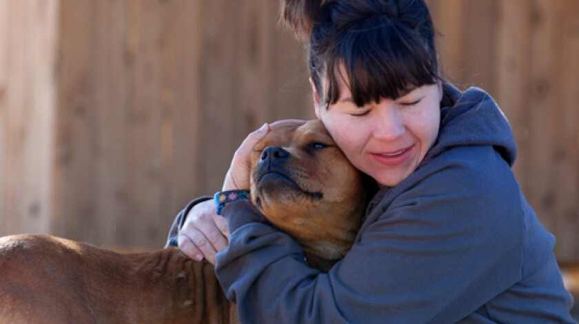PLAY: Trainer Ann Alums works with Meryl, who'd been aggressive toward people since removal from Michael Vick's kennel.