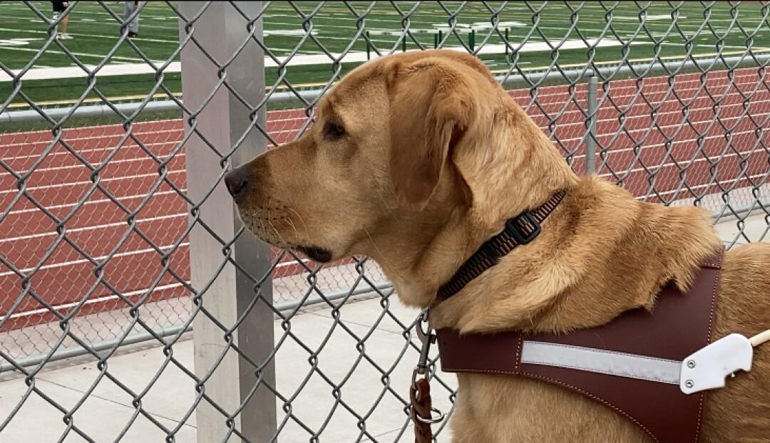 Le chien-guide Tron aime regarder Kym Crosby s'entraîner.
