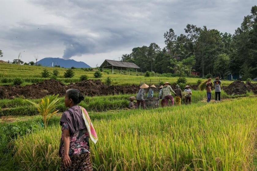 Agricultores trabajan en una granja mientras el volcán Monte Agung arroja ceniza volcánica caliente en Karangasem, Bali, Indonesia. EFE/Archivo