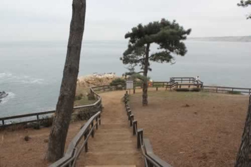 The steps leading from Coast Walk to the Goldfish Point overlook, where shop owner Jim Allen hopes to add indigenous plants to keep birds and tourists off the unstable cliff, and fill an arroyo to slow erosion. Pat Sherman photos