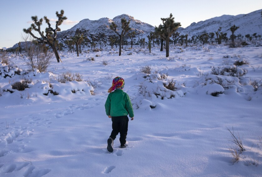 Jay Shepherd, 4, plays in the snow just before the sun sets Friday in Joshua Tree National Park.