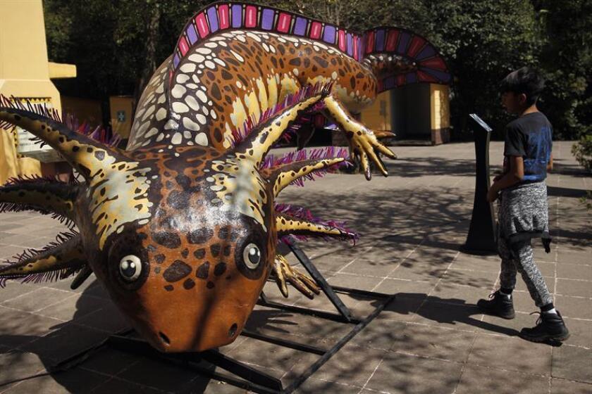 """Un niño observa una pieza de la exposición """"México Megadiverso"""" hoy, miércoles 28 de marzo de 2018, en Ciudad de México (México). La fauna mexicana y el arte popular se fusionan en monumentales estructuras que representan a especies mexicanas en riesgo en la exposición """"México Megadiverso"""", inaugurada hoy en la capital del país. EFE"""
