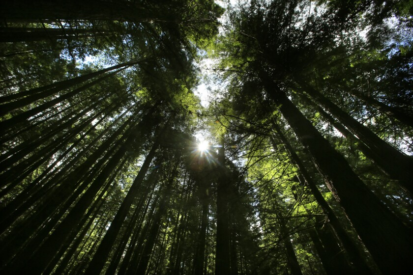 Humboldt Redwoods State Park near Weott is one of the sites where you can get a free pass to visit on Black Friday.