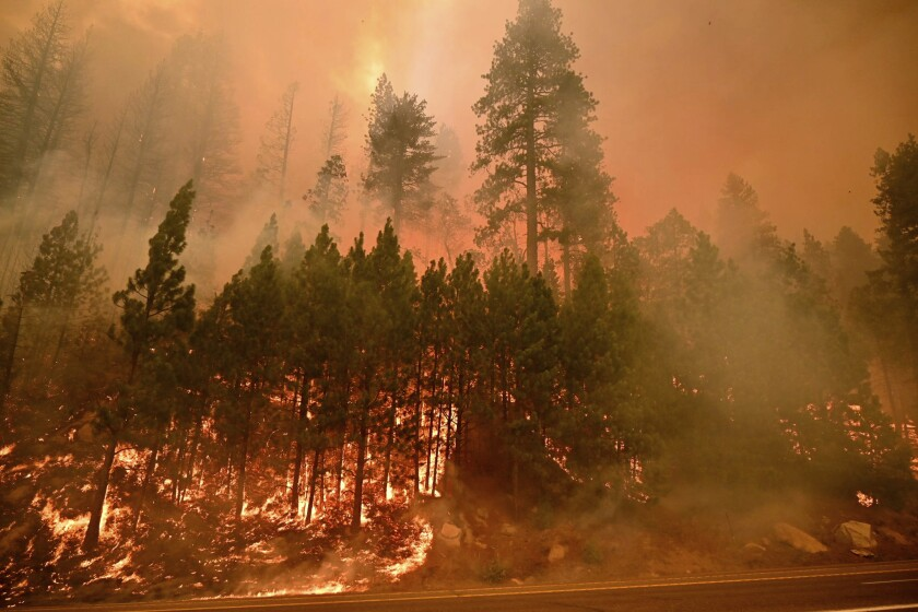 Trees on the side of a highway in flames