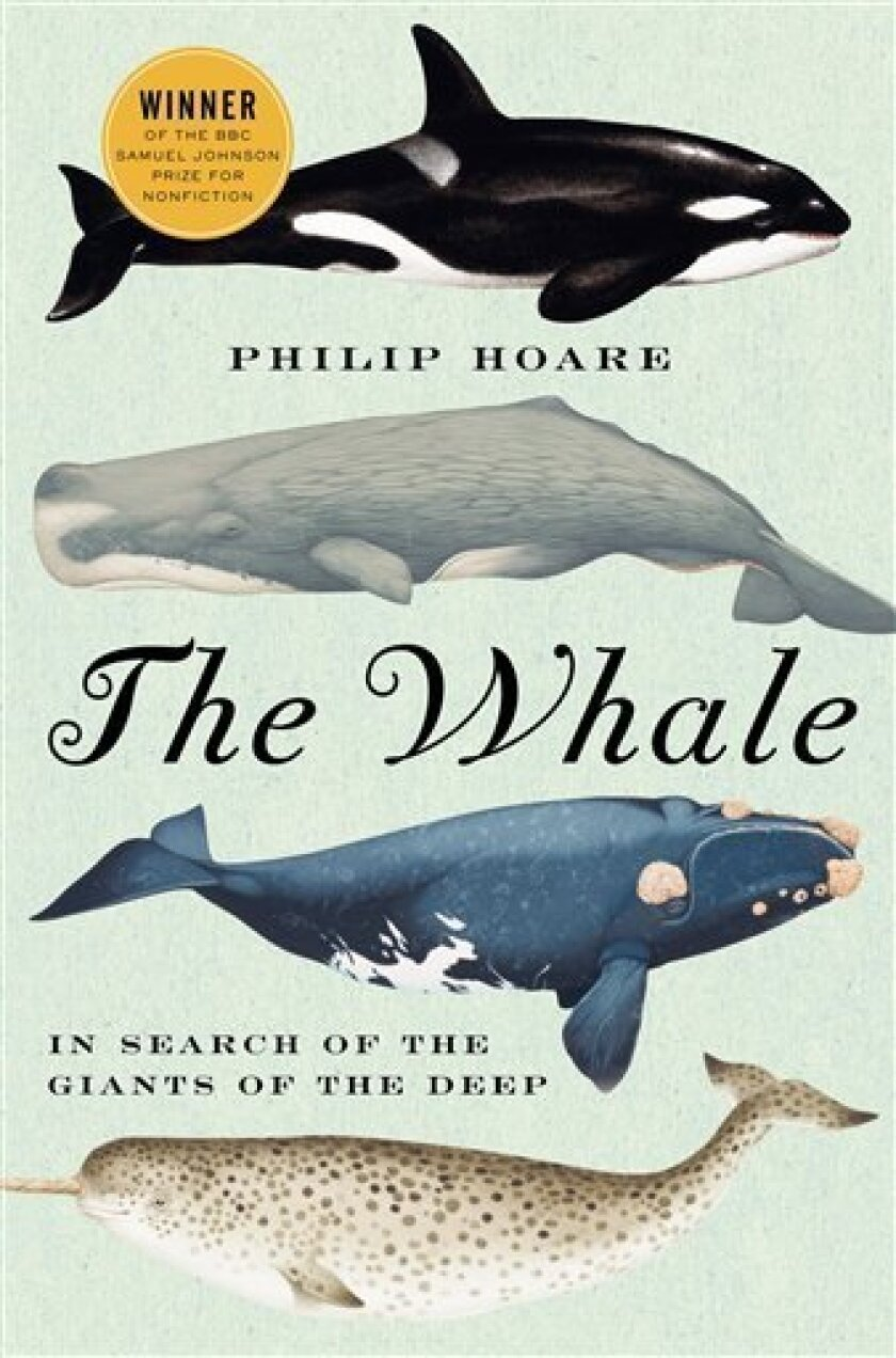 "In this book cover image released by HarperCollins, ""The Whale: In Search of the Giants of the Sea"" by Philip Hoare is shown. (AP Photo/HarperCollins)"