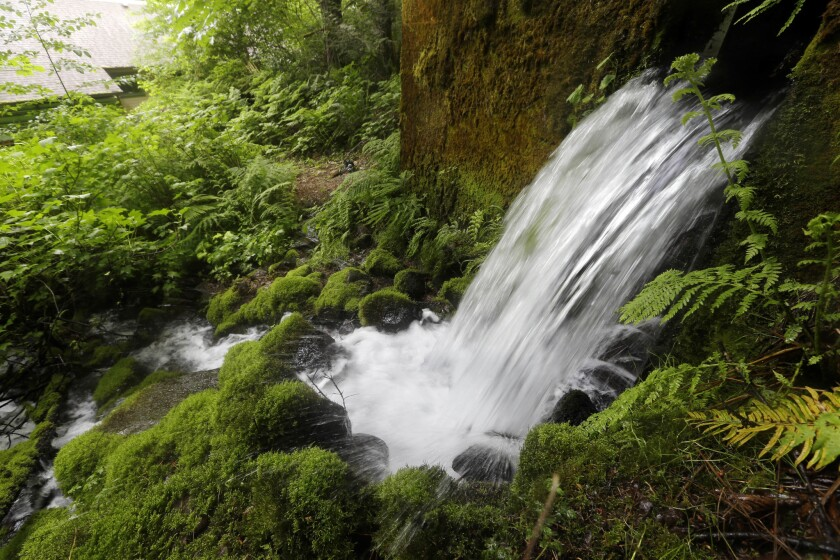 Cascade Locks gets almost 80 inches of rain a year.