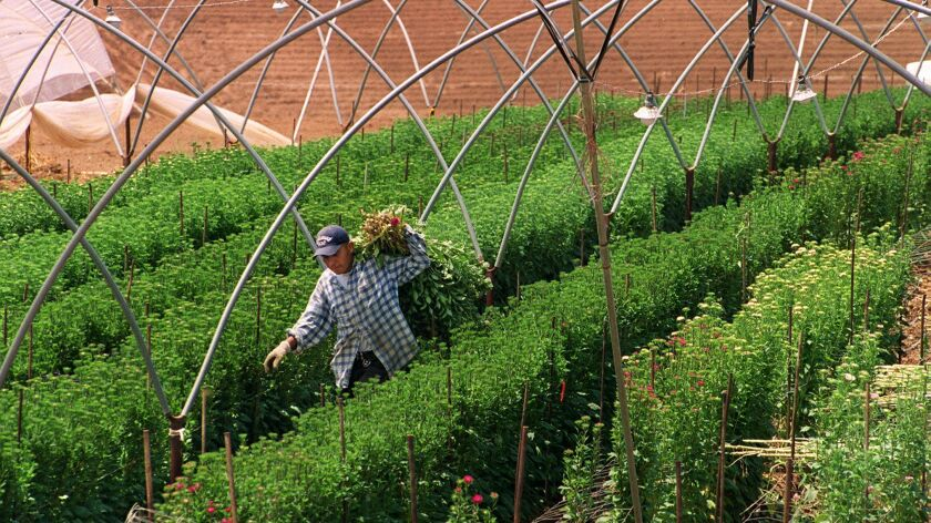 Farming in Morro Hills