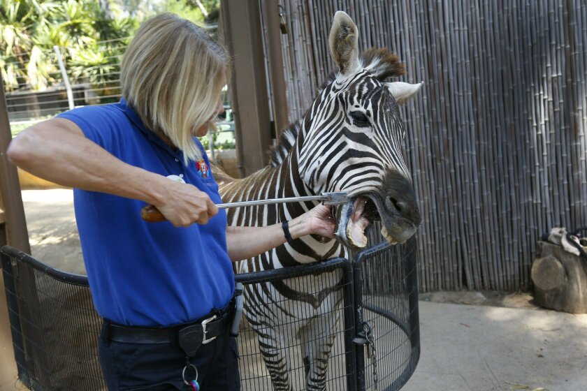 A behind-the-scenes look at the San Diego Zoo - The San