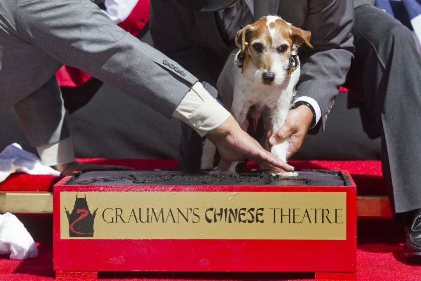 Uggie dies: 'The Artist' dog had that intangible star quality
