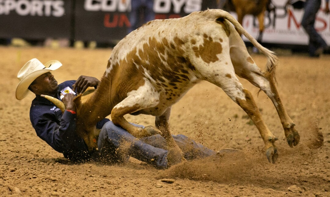 A cowboy tries to wrestle a calf to the ground in the bulldogging competition