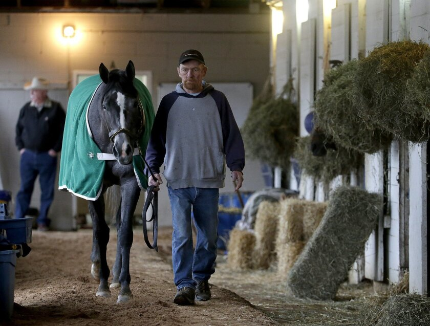 Hot walker Mike Wells walks Mizz Money in a loop at the barn where he works at Churchill Downs Thursday, April 30, 2015, in Louisville, Ky. Wells walks several miles a day without leaving the barn leading thoroughbreds as they cool off after working out on the track. (AP Photo/Charlie Riedel)