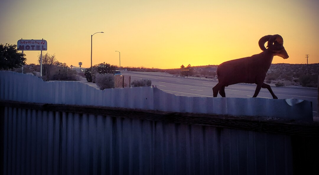 A mountain goat statue appears to be walking along the top of a fence at sunset