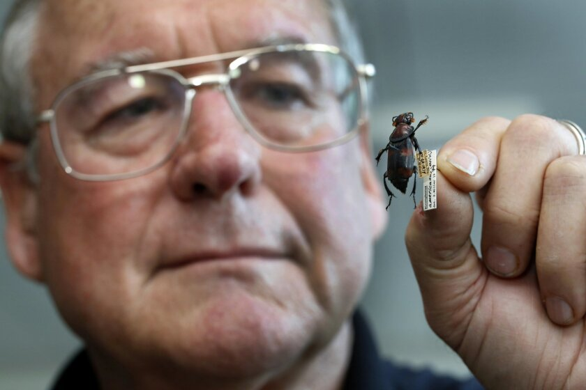 David Faulkner, one of a handful of entomologists who use bugs to help solve crimes in the U.S., with a silphid beetle, also known as the burying beetle.